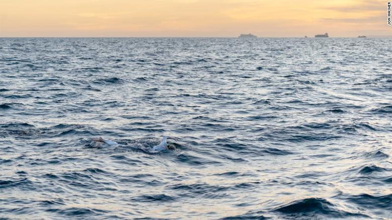 Sarah Thomas swimming at sunrise or set